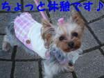 2007_0307はる0059-1.JPG