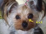 2007_0518 はる0043.jpg