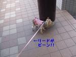 2007_0522 はる0051.jpg