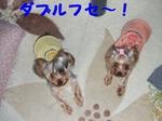 2007_0530 はる0061.jpg
