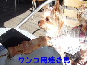 2007_0307はる0046-1.JPG