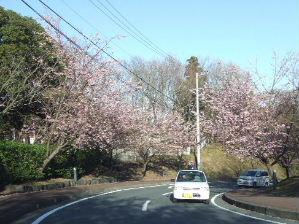 2007_0307はる0065-1.JPG