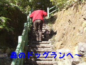 2007_0307はる0190-1.JPG