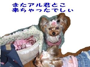 2007_0321 はる0100.jpg