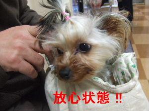 2007_0418 はる0046.JPG