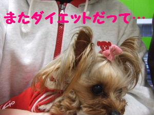 2007_0418 はる0048.JPG
