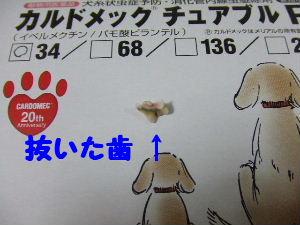2007_0418 はる0051.JPG