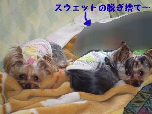2007_0422 はる0045.jpg