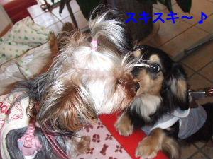 2007_0426 はる0050.JPG