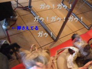 2007_0426 はる0066.JPG