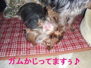 2007_0428 はる0045.JPG