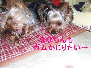2007_0428 はる0053.JPG