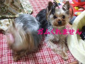 2007_0428 はる0056.JPG