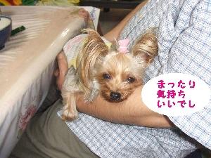 2007_0527 はる0117.jpg