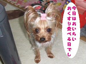 2007_0531 はる0052.JPG