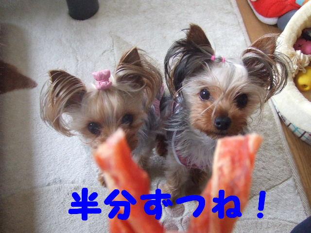 2007_0601 はる0053.JPG