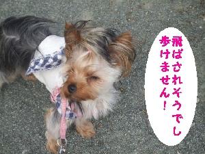 2007_0608 はる0056.jpg