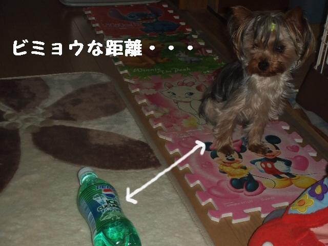 2007_0616 はる0061.jpg