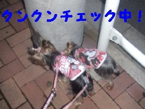 2007_0625 はる0050.jpg