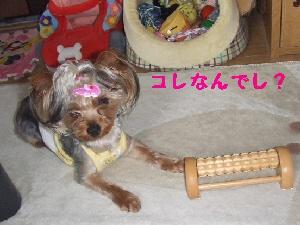2007_0702 はる0046.JPG