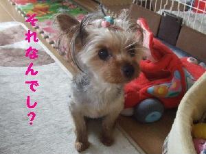 2007_0706 はる0053.JPG