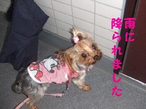 2007_0726 はる0054.jpg