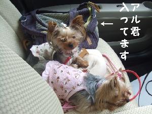 2007_0731 はる0121.jpg