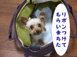 2007_0731 はる0143.jpg