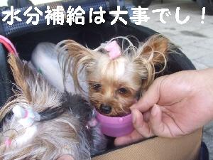2007_0813 はる0050.jpg