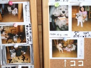 2007_0821 はる0078.jpg