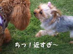 2007_0826 はる0063.jpg