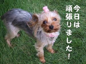 2007_0826 はる0066.jpg