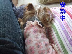 2007_1004 はる0070.jpg