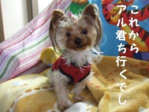 2007_1027 はる0051.jpg