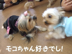 2007_1028 はる0073.jpg