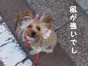 2007_1120 はる0058.JPG