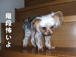 2007_1129 はる0057.jpg