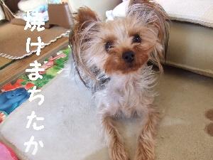 2007_1210 はる0057.jpg