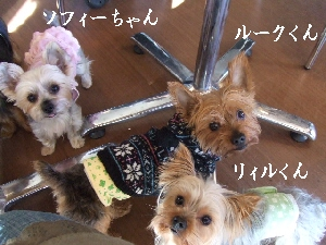 2007_1216 はる0061.jpg
