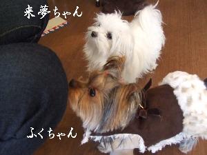 2007_1216 はる0073.jpg