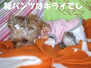 2007_1218 はる0046.jpg