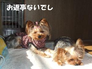 2007_1220 はる0054.JPG