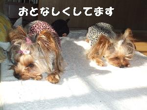 2007_1220 はる0061.jpg