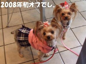 2008_0106 はる0053.JPG