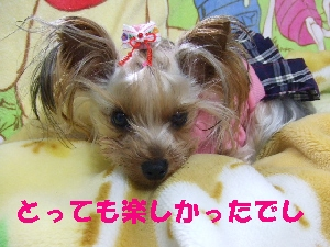 2008_0106 はる0074.jpg