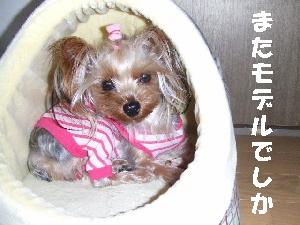 2008_0107 はる0047.jpg