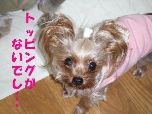 2008_0114 はる0069.jpg