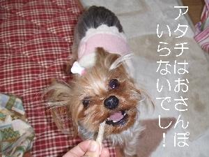 2008_0118 はる0053.jpg