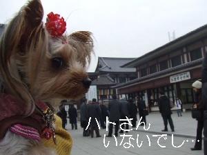 2008_0122 はる0047.jpg