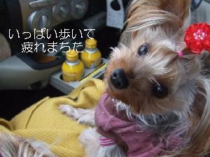 2008_0122 はる0056.jpg